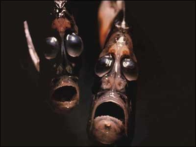 smilingfish